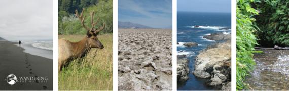 Matt Emerson WBNL California Mosaic2